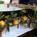 box-gardens-succulents-with-autumn-gourds-and-accents-3500-each