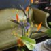 tropical-bird-of-paradise-anthurium-pin-cushion-protea-agapanthus-orchid-craspedia-11500